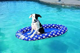 Kelsyus Canopy Chair Recall by Amazon Com Swimways Spring Float Paddle Paws Dog Pool Float Toys