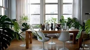 Best Plant For Windowless Bathroom by Bathroom Good Plants Forthroom Images Inspirations