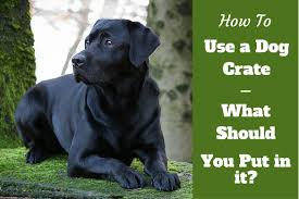 How To Build A End Table Dog Crate by How To Use A Dog Crate When And When Not To Crate A Dog