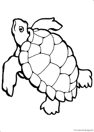 Fresh Ocean Animal Coloring Pages Free Downloads For Your KIDS