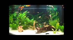aquarium d eau douce aquarium d eau douce fish tank 180l aquarium d eau douce