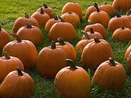 Best Pumpkin Farms In Maryland by 24 Pumpkin Patches Near Washington D C Mapped