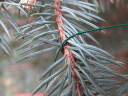 Sugar Or Aspirin For Christmas Tree by Tree Care Tips To Make Your Holiday Shine Diy Network Blog Made