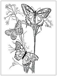 Free Printable Coloring Pages Life Cycle Butterfly Monarch Pictures For Adults In Kids Full Size