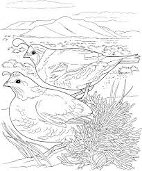 Several Quail Coloring Pages Here