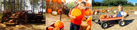 Lathrop Pumpkin Patch Maze by Come Explore Fun Fall Family Activities At Our Pumpkin Patch