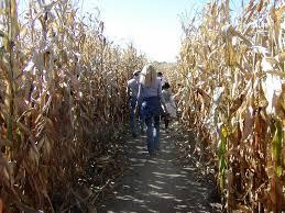 Pumpkin Patches Cincinnati Ohio Area by The Best Corn Mazes In Cincinnati Axs
