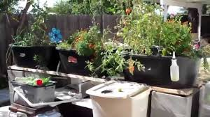 Backyard Aquaponics StogieFarts System Update YouTube