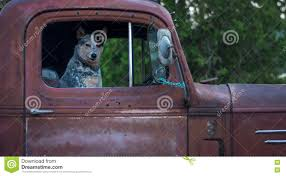 Dog In Old Red Pickup Truck Stock Image - Image Of Australian, Cute ... Best Dog Crate For Pickup Truck Beds Soft Plastic Alinum Bearded Dogs Food Truck Is Now Sling Gourmet Dogs At A Brewery Dog 2 Album On Imgur And Richmond Sand Gravel Landscaping Large Seen In The Back Of A Waiting Its Owner Stock Bernese Mountain Puppies In Doggies Swiss Takes Semi On Joyride Crashes Into Tree And Parked Car Treat East Greenbush Albany Ny Mugzys Barkery Cowgirl Driving Old Stocksy United Pbs 4 Axle Delivery Muscat Arizona Patrol Volunteer Saves Tied To Heading 3 Trailer