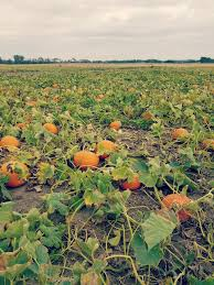 Pumpkin Farms In Wisconsin Dells by Fall Family Fun Shades Of Autumn Festival At Stade U0027s Farm In