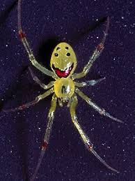Remains Of The Day Spiders by British Scientists Study Hawaiian Happy Face Spider Telegraph
