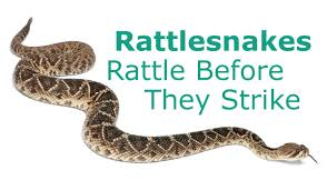 rattlesnakes rattle before they strike don t believe that