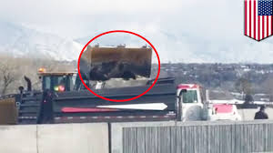 Animals Mistreated: Live Cattle Dumped Like Trash After Utah Trailer ... Electronic Logging Devices Cmvs What New Regulations Mean For Salt Lake City Utah Restaurant Attorney Bank Drhospital Hotel Dept Truck Hauling 2 Miatas Crashes Hangs Above Steep Dropoff On I15 2017 J L 850 Doubles Dry Bulk Pneumatic Tank Trailer With Passes Through A Small Town Stock Beamng Drive Tanker Road Train In Utah Youtube Fifth Wheeler Trailer Towed By Pickup Truck Scenic Byway Towing Enclosed Image Of Utah Possible Brake Failure Causes Towing Camping To Spin The Driving Championships Roll Into The State Fair Park Tecumseh 42 Tri Axle Side Dump Side Dump Semi Sale Cr England Partners With University Football Team