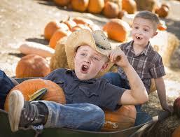 Pasadena Pumpkin Patch Groupon by P 6 Farms