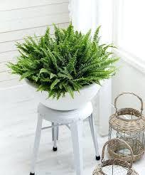 best lighting for indoor plants – Mobcart
