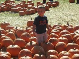 Live Oak Canyon Pumpkin Patch 2015 by Fall Family Fun Pumpkin Patch Directory Usmc Life