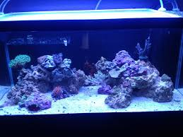 What Kind Of Aqua Scape Styles Are There | REEF2REEF Saltwater And ... Is This Aquascape Ok Aquarium Advice Forum Community Reefcleaners Rock Aquascaping Contest Live Rocks In Your Saltwater Post Your Modern Aquascape Reef Central Online There A Science To Live Rock Sanctuary 90 Gallon Build Update 9 Youtube Page 3 The Tank Show Skills 16 How Care What Makes Great Large Custom Living Coral Aquariums Nyc