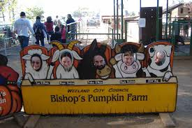 Bishop Pumpkin Patch Lincoln Ca by Photo Tr Of Bishop U0027s Pumpkin Farm Theme Park Review