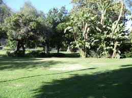 100 Holmby FileTrees In Park Hills Los Angeles California