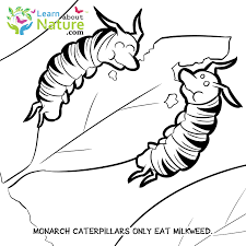 FREE Monarch Pictures Never Be Bored With So Many Coloring Sheets Pages To Print