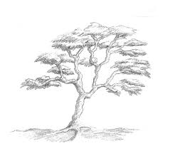 Art by Aunt Marcy Simple Pencil Drawing of a Tree Clip Art Library