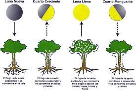 recolte cannabis exterieur date cultiver le cannabis avec la lune
