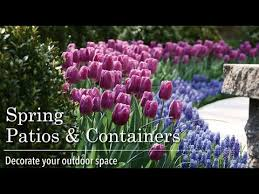 blooming bulbs in containers