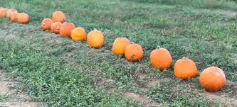 Griffin Farms Pumpkin Patch by Pumpkin Patches 2017 Birmingham Fun And Family Magazine
