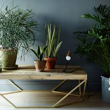 5 NoKill House Plants For Any Home