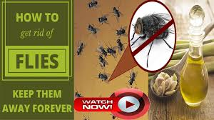 How To Get Rid Of Flies In Backyard Kitchen Trash Can Pull Out 1 ... How To Get Rid Of Flies In Backyard Outdoor Goods Diy Using Pine Sol To Of House Youtube 25 Unique What Kills Fruit Flies Ideas On Pinterest Pest Keep Away Repellent Rid Rotline Do I Get Solana Center For 3 Ways Around Your Dogs Water And Food Bowls Fruit Kill Do You Chicken Coop For Happier Hens Coops Those Pesky Flies From Pnic Areas Easy Home Remedy Coping With The Fall The New York Times Outdoors Step By