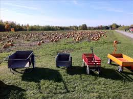 Michigan Pumpkin Patch Apple Orchard by Golden River Orchard Michigan Farm Fun