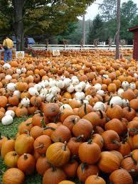 Burts Pumpkin Farm Controversy by Burt U0027s Pumpkin Patch Near Amicalola Falls Ga Fell In Love