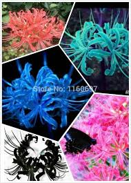 free shipping home decoration flower bulbs lycoris blubs45color