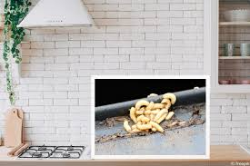 maden in der küche bekämpfen 7 effektive mittel