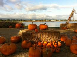 Pumpkin Patch San Jose 2015 by Pick Your Pumpkin By The Water At Shoreline Lake Mountain View