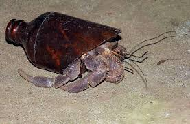 Do Hermit Crabs Shed Their Whole Body by Sunrise Madang Ples Bilong Mi Part 2