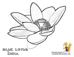 India Tropical Flower Printable Blue Lotus At YesColoring