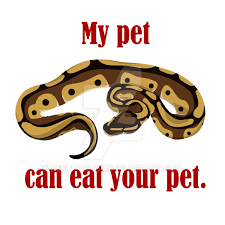 Ball Python Shedding Eating by T Shirt Design Ball Python By Pestdoktor On Deviantart