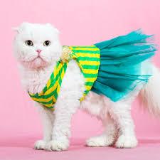 cat wedding dress cat dress cat princess wedding dress summer clothes cat clothes