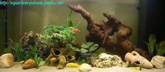aquarium d eau douce photos aquarium site de poisson tropicaux d