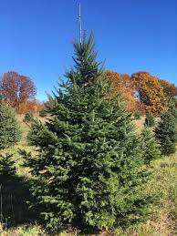 Cutting Your Tree At A Farm Not Only Satisfies Your Own Inner Lumberjack But Also Makes For A Sustainable Forestry And Is In Fact Healthy For The Planet Cut Your Own Christmas Tree Ottawa