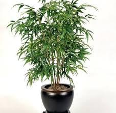 Low Light Indoor Plants Low Light Low Light High Humidity Indoor