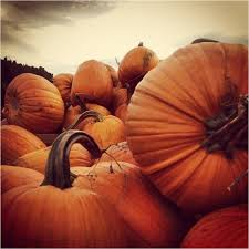 Best Pumpkin Patch Snohomish by Tag Archive For