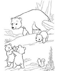 Polar Bear Coloring Pages Sketch Page