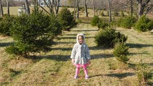 Christmas Tree Preservative Recipe by 3 Reasons To Visit A Christmas Tree Farm Theresa U0027s Reviews