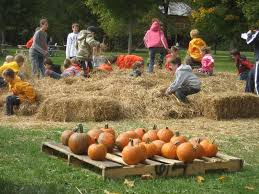 Pumpkin Festival Cleveland Ohio akron ohio area corn mazes hay rides pumpkin patches and fall