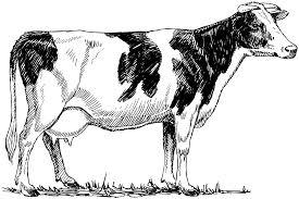 4 Coloriage Vache Qui Rit 45164 Rafa Examples