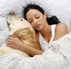 getrennt schlafen warum der hund der bessere schlaf partner