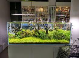 13 best aquarium images on aquariums aquascaping and