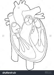 Vector Contour Line Drawing Insides Heart Stock 20386327